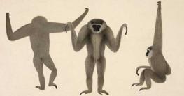 বাঙালির আঁকা দু'শো বছর আগের ছবির ব্রিটিশ লাইব্রেরিতে স্থান