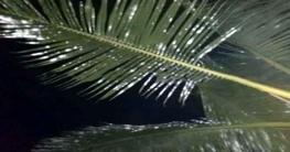 কুমিল্লায় গাছের পাতার রং পরিবর্তনে এলাকায় তোলপাড়