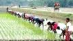বোরো চাষে ব্যস্ত সময়ে গাইবান্ধার কৃষকরা