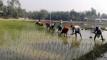 শীতের তীব্রতা উপেক্ষা করে রৌমারীতে ইরি-বোরো চাষে ব্যস্ত কৃষক