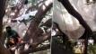 করোনা থেকে গ্রামকে বাঁচাতে, গাছের ডালে সাত জনের কোয়ারেন্টাইন