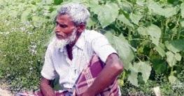 উপজেলা কৃষি অফিসের সহযোগীতায় ভুঞাপুরের সফল কৃষক আহসান