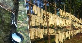 ২০ লাখ টাকার চোরাই রাবার সহ মধুপুরে দু'জন আটক