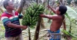 টাঙ্গাইলের উপজাতিদের সংকট কাটাতে পণ্য কিনছে 'স্বপ্ন'