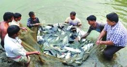 দেশের ৪ হাজার ৩০০ পুকুরে মাছ চাষের উদ্যোগ