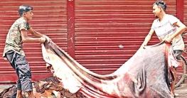 চামড়া কিনতে অগ্রাধিকার ভিত্তিতে ঋণ দিতে বাংলাদেশ ব্যাংকের নির্দেশ