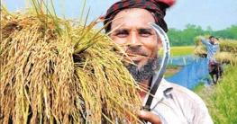 বোরোর এবার বাম্পার ফলন, বিক্রি করে লাভবান কৃষক