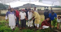 রাজধানীতে মুজিববর্ষ উপলক্ষে ১হাজার গাছ লাগালেন যুবলীগ নেতা শ্যামল