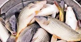 দেশে মাছ উৎপাদনে নতুন রেকর্ড