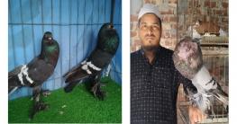 কবুতরের খামার দিয়ে স্বাবলম্বী মধুপুরের শামছুদ্দিন