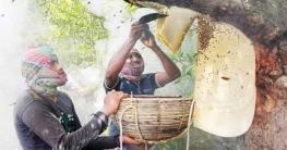 করোনাকালেও সুন্দরবনে ২০০ টন মধু আহরণ