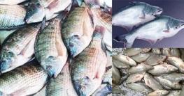 যে তিন মাছ বদলে দিয়েছে দেশের মৎস্য উৎপাদনের চিত্র