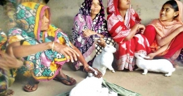 খরগোশ পালনে স্বাবলম্বী মধুপুরের গ্রামের নারীরা