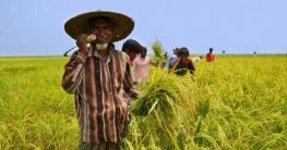 আধুনিক কৃষি প্রশিক্ষণ পাচ্ছেন সারাদেশের ১৫ হাজার কৃষক
