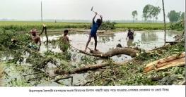 উল্লাপাড়ায় দু'দফা শীলা বৃষ্টি ঝড়ে বেশ ক্ষয়ক্ষতি