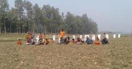 রৌমারীর চরাঞ্চলে গোলআলুর বাম্পার ফলন
