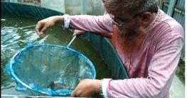 সাঘাটায় আধুনিক বায়োফ্লোক পদ্ধতিতে মাছ চাষে সফলতা