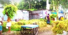 ভূঞাপুর জমজমাট ঘাসের বাজার