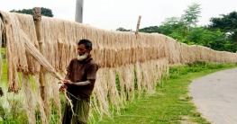 পাটে ভালো দাম পাচ্ছেন দেশের কৃষক