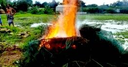 বাসাইলে বিপুল পরিমাণ চায়না জাল ধ্বংস
